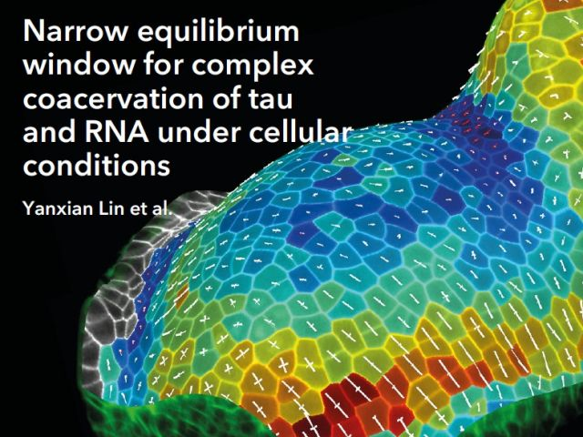 Yanxian Lin's Paper on Tau-RNA Complex Highlighted on eLife